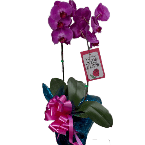 Orquídeas lila