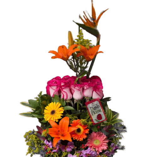 Rosas bicolor con flores variadas