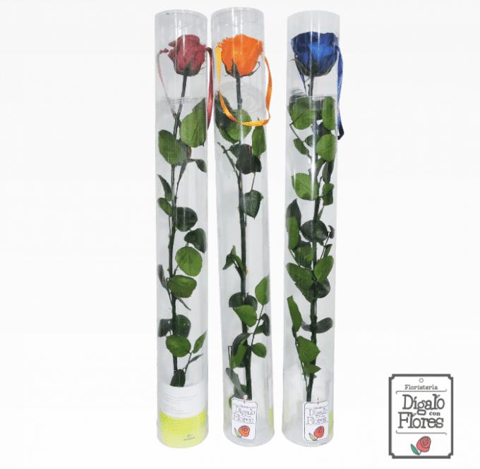 Rosas preservadas de colores en Bogotá